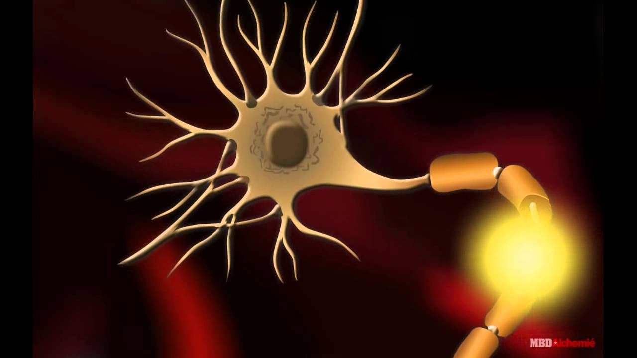 the nerve cell Nerve cell signals that guide movement are complex and dynamic,  as the  nerve cells controlling these stop and go signals are tightly.