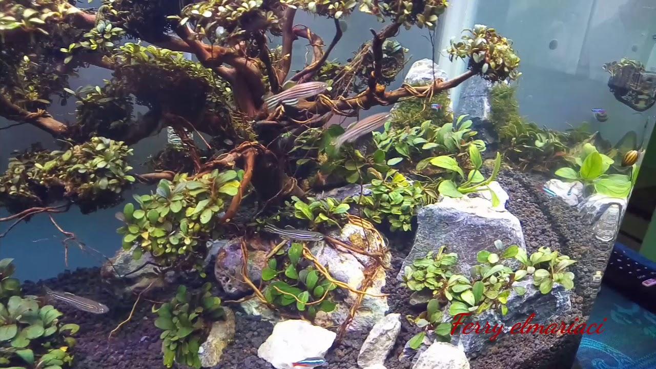 #1 aquascape tema bonsai tanpa inject co2 - YouTube