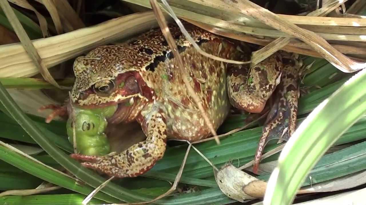 Frog Eats Caterpillar - YouTube