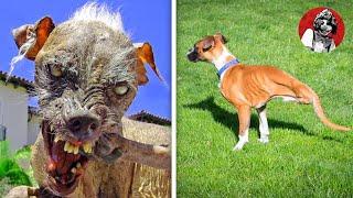 Los 8 perros más raros y únicos que no creerás que existen (Parte 1) | Oscar Jack
