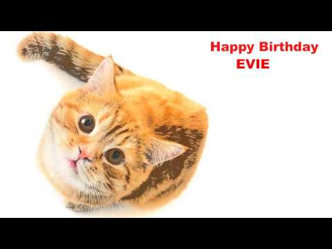 Evie  Cats Gatos - Happy Birthday
