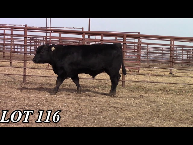 Mead Angus Farms Lot 116