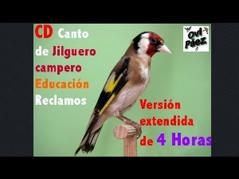 Descargar CD Canto del jilguero(4 Horas)para educar reclamos.Versión Extendida