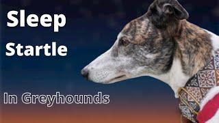 Sleep Startle in Greyhound