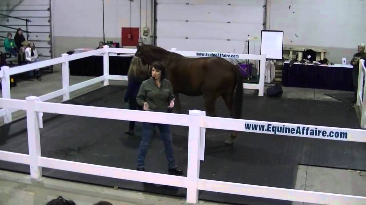 Equine physical therapy - Physical Therapy For Equine Stifle Dysfunction Part 2 Of 7