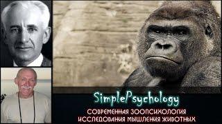 Современная зоопсихология. Исследования мышления животных.
