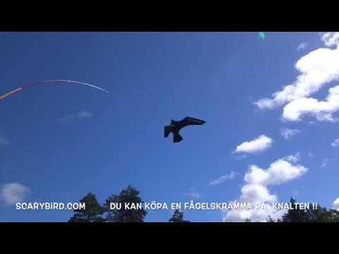 Fantastisk Fågelskrämma - YouTube YB-13