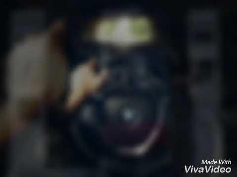 Killa fonic (Videoclip) 9 ciori