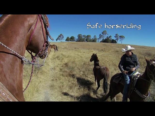 Horseriding in Mexico V