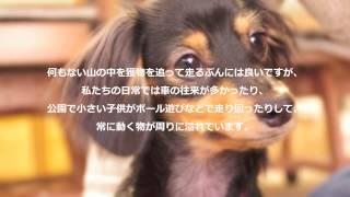 犬のしつけ方やお役に立つ情報をお届けしています。 犬のしつけお悩み.c...