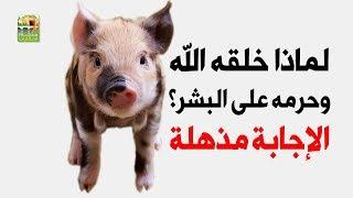 لماذا خلق الله الخنزير إذا كان محرما على بني البشر؟ إجابة مذهلة