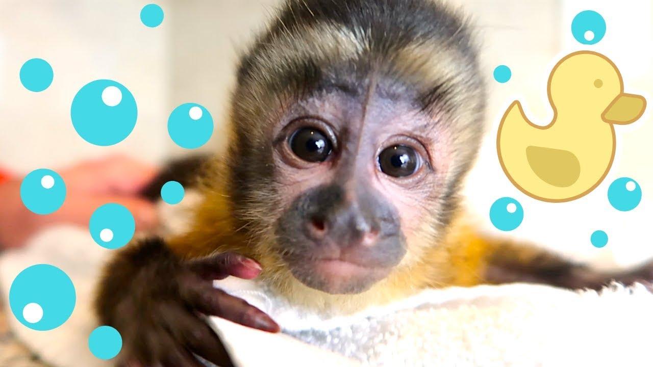 baby-monkey-bath-time-happy-s-first-bath