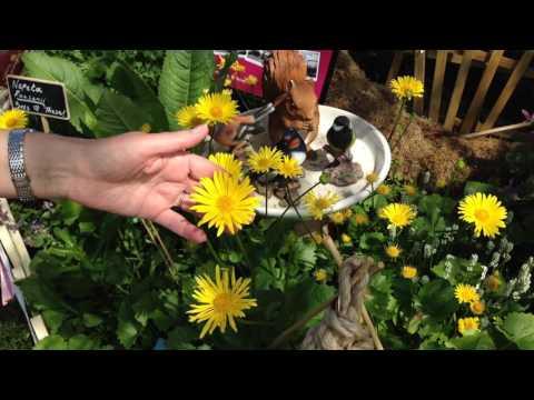 Wildlife Gardening with Squire's Garden Centres