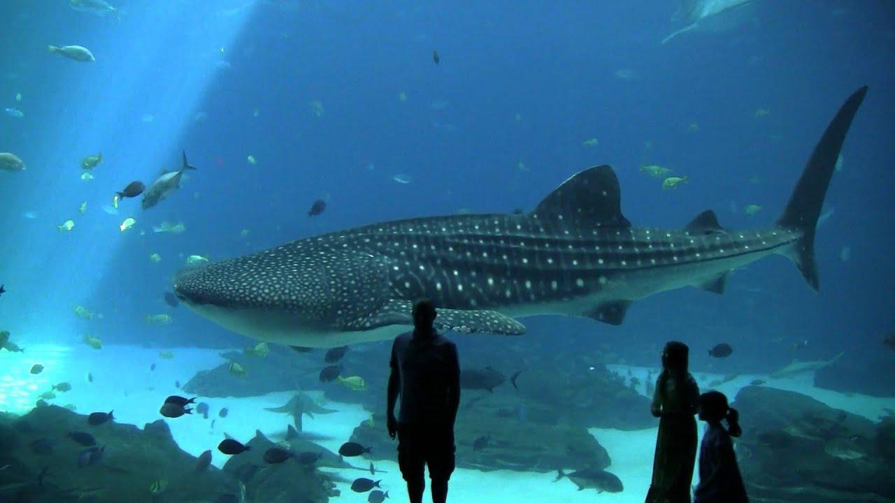 15. Largest Aquarium in the World!! Atlanta Georgia - YouTube