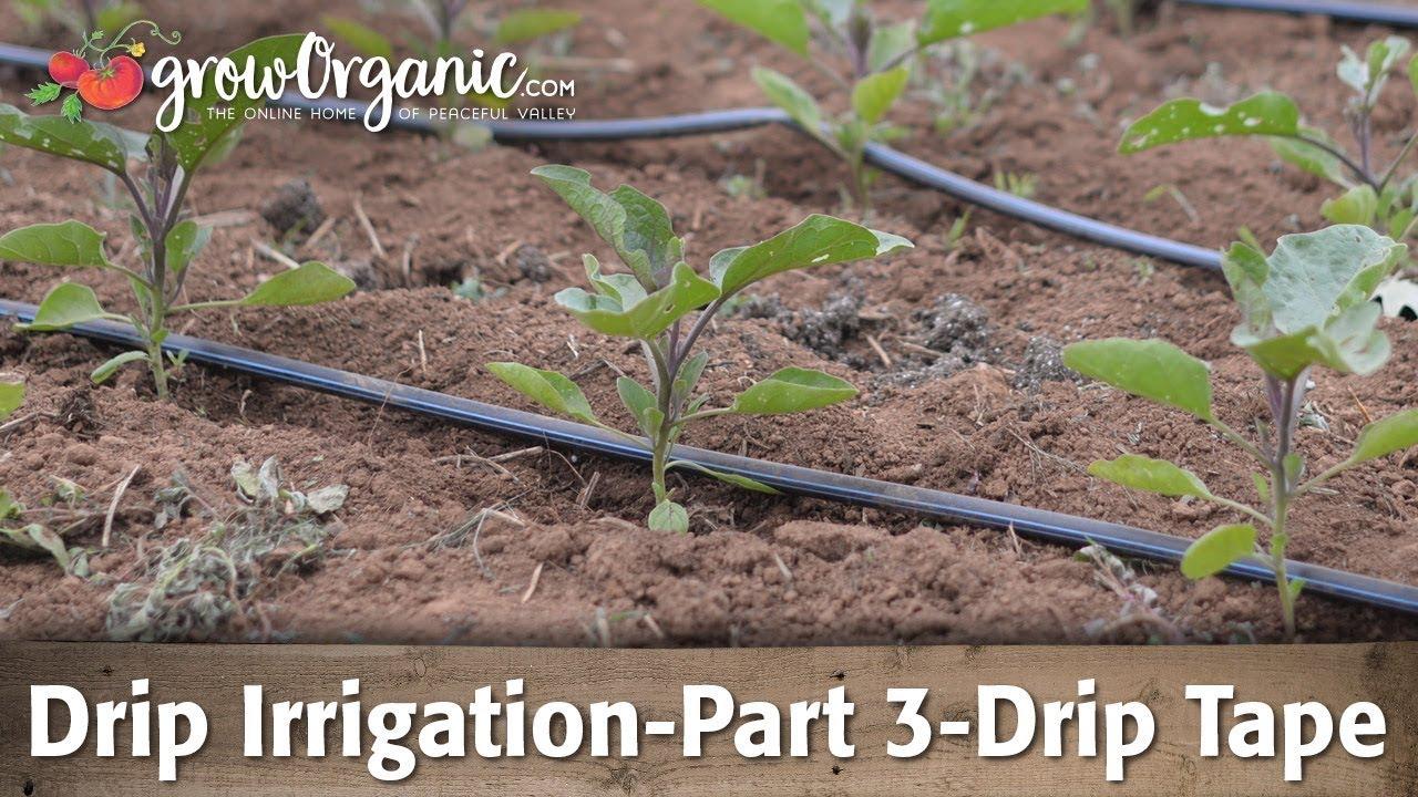 Drip Irrigation-Part 3-Using Drip Tape