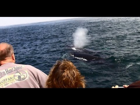 7.25.14 Humpback Whales & Long Beaked Common Dolphins
