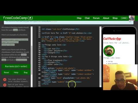 Create A Set Of Checkboxes, FreeCodeCamp Review Html & Css, Lesson 33
