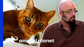 Is This Neutered Cat Producing Testosterone? | My Cat From Hell