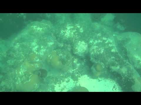 CLIMATE CHANGE AFFECTS ON CORAL REEFS