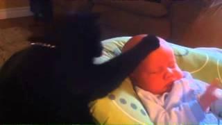 Кошка Нянька! Кошка Уложила Спать Малыша