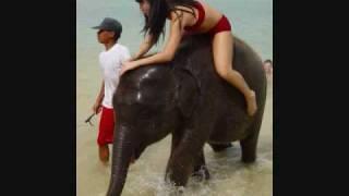 I Want An Elephant!