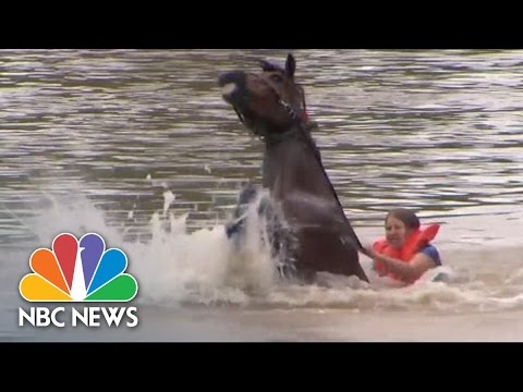 Woman Rescues Horse From Floodwaters | NBC News