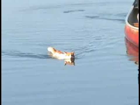 Merlin the Cat swims again