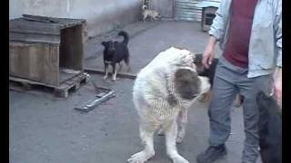 Собаки-инвалиды приюта ПИФ, Донецк.flv