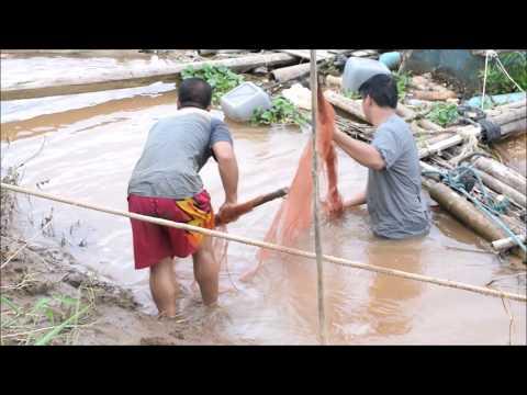 catching shrimp and catching fish in savannakhet laos - net fishing