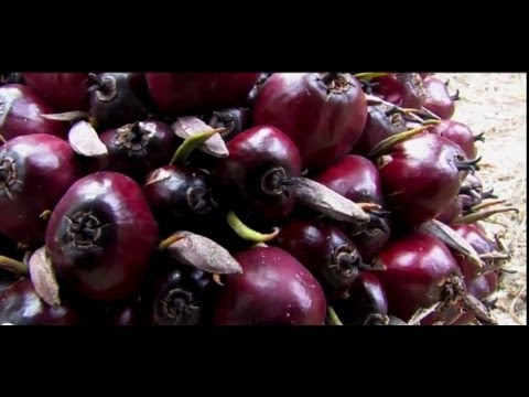 Palm Oil: Nature's Blessing or Nature's Curse? Part 1