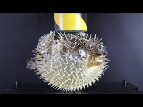 50 Tonnen Presse gegen einen Kugelfisch - Jumanji TM