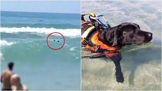 Palinuro salva un ragazzo che sta annegando Flash e gli angeli a 4 zampe delle spiagge italiane