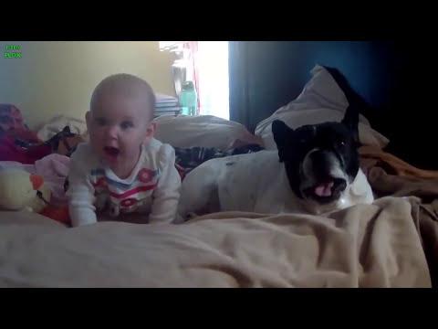 Sự đáng yêu của baby và động vật xung quanh - SocNauKids.com - Clip thật hài hước!!!
