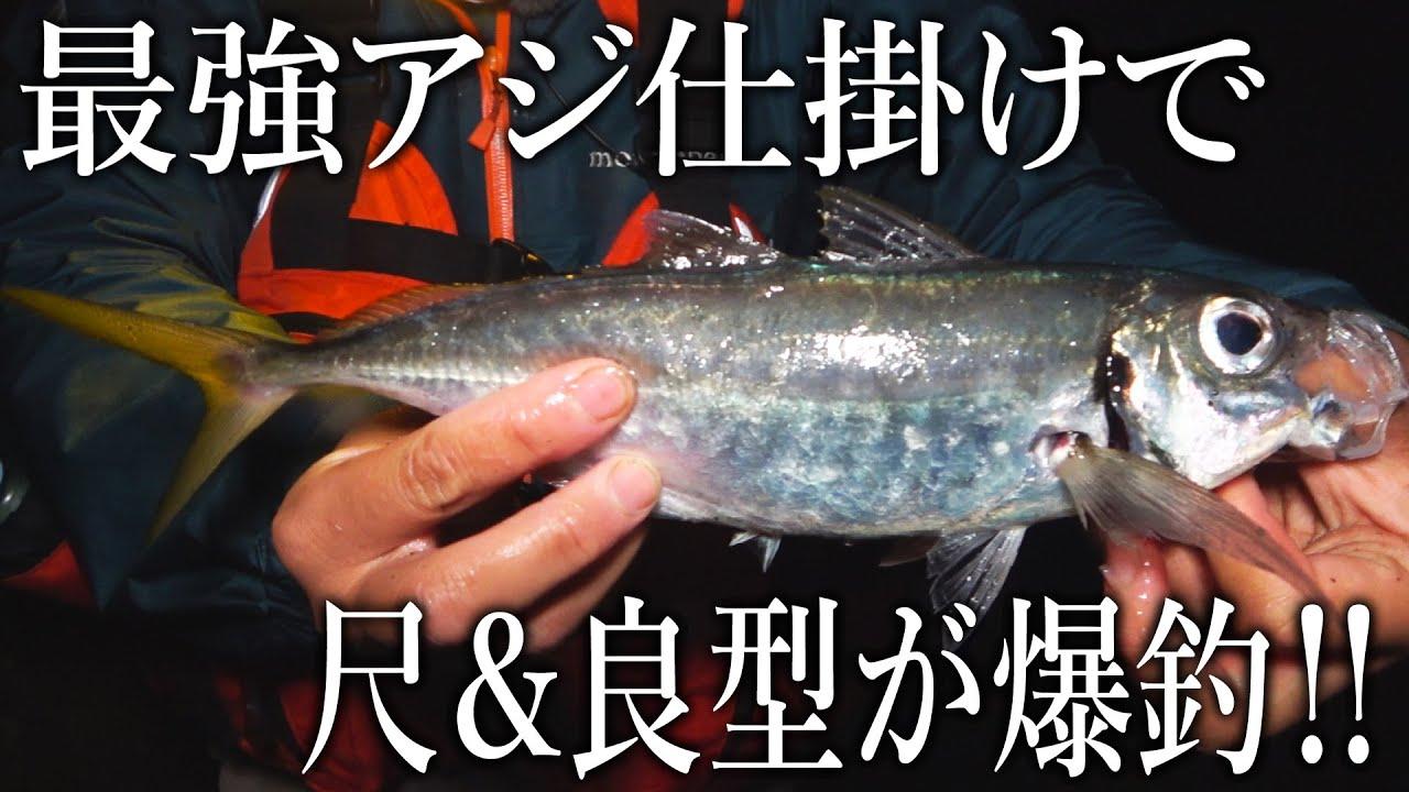 【夜のアジ釣り最強仕掛け】30㎝越えの尺アジ&良型アジが爆釣した!