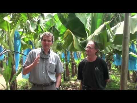 BAM Field Interviews 1- Denis Loeillet and Thierry Lescot
