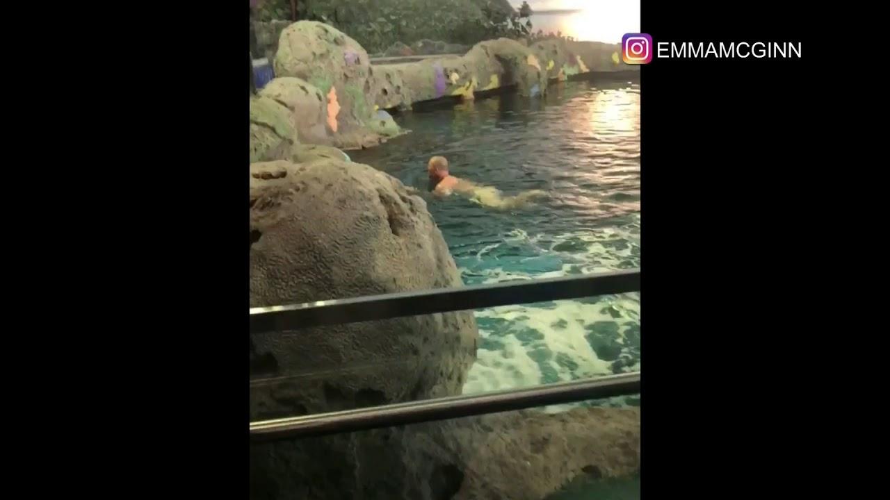 Naked man jumps into Toronto's Ripley's Aquarium shark tank