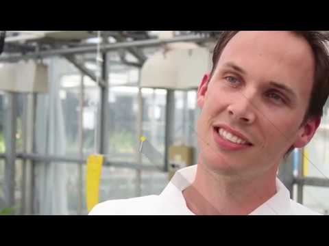 Why we need GMO food