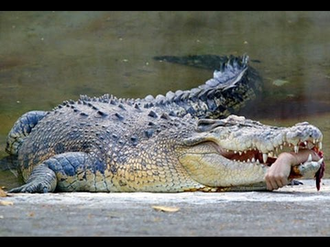 Crocodile attacks and kills man in australia
