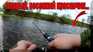 Ловля жереха на спиннинг весной на малой реке Рыбалка на Голавля на Перекате