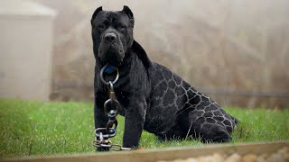 Top 10 Most and Least Popular Dog Breeds