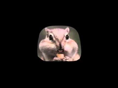 노래하는 다람쥐 - 다람쥐 동요