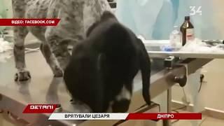 Днепровские ветеринары спасли щенка, который проглотил серьгу