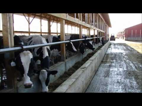 New Barn Farm Girl Dairy Farm Family Farm Dairy Cows