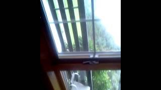 San miguel monteverde