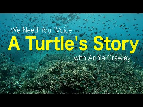 A Turtle's Story