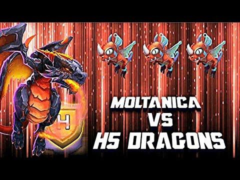 Moltanica VS Fairy Dragon's