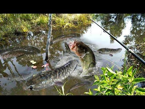 Amazing Boy Fishing Fish in Canal | Fish Hunting