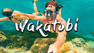 MY EXPERIENCE OF WAKATOBI INDONESIA