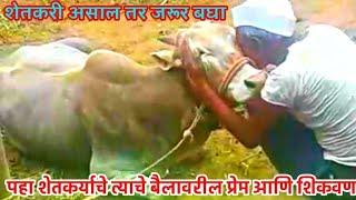 शेतकरी आणि बैल यांच्यातलं नातं.. शेतकऱ्यानं जरूर बघा ! अनंता हिंगे पाटील -महाराष्ट्र बैलगाडा शर्यत
