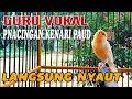 Kenari Gacor Panjang Satu Nafas  Mp3 - Mp4 Download